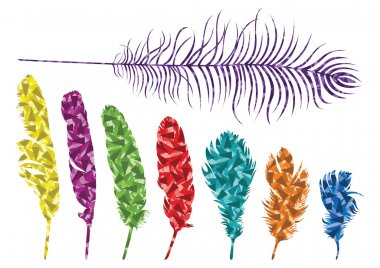 Colorful bird feathers illustration collection background