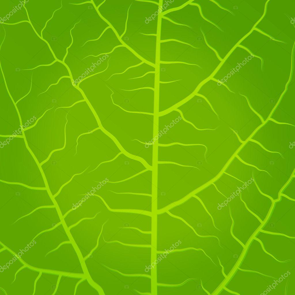Fresh, green tea leaves on a white background vector