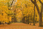 Fotografie New Yorker Central Park-Allee im Herbst