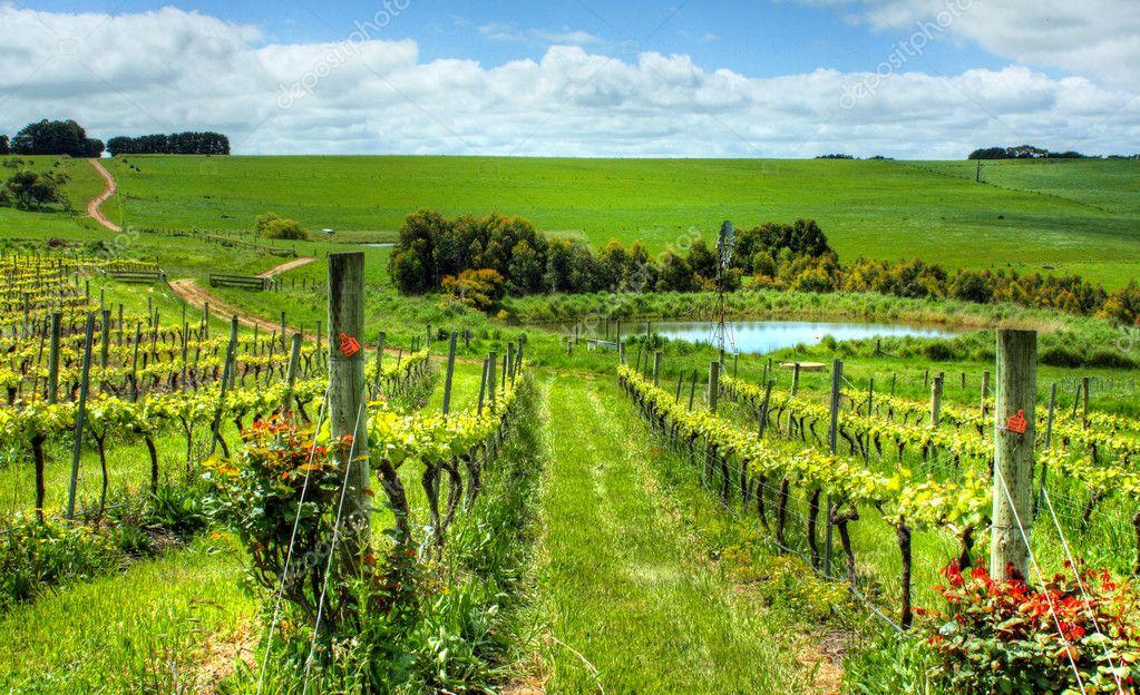 Beautiful Australian Vineyard