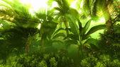 Ranní mlha v hustých tropických deštných pralesů