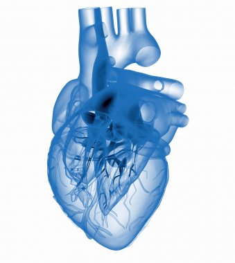 Model of artificial human heart - x-rayed