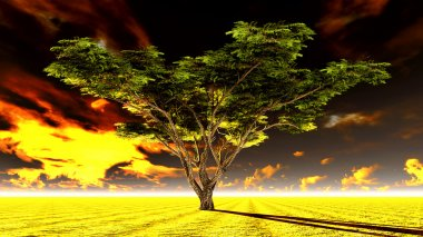 Large Acacia tree in the open savanna plains of Africa