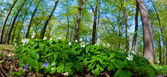 tempo di primavera nel parco