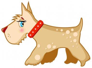 Vector dog Schnauzer terrier