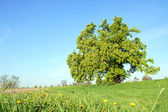 Strom a modrá obloha