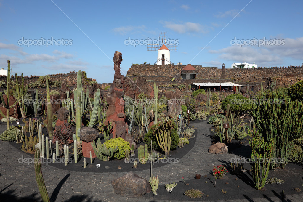 cactus garden jardin de cactus on canary island lanzarote spain photo by philipus