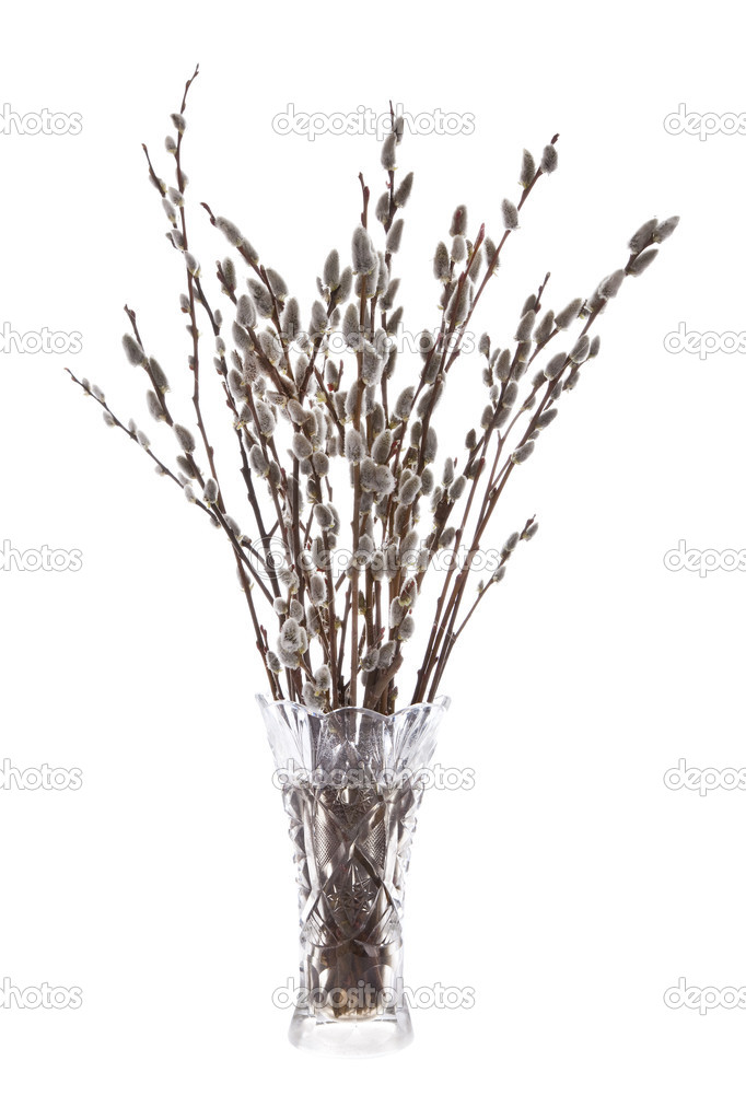 Branches of the pussy willow with flowering bud in vase with wat