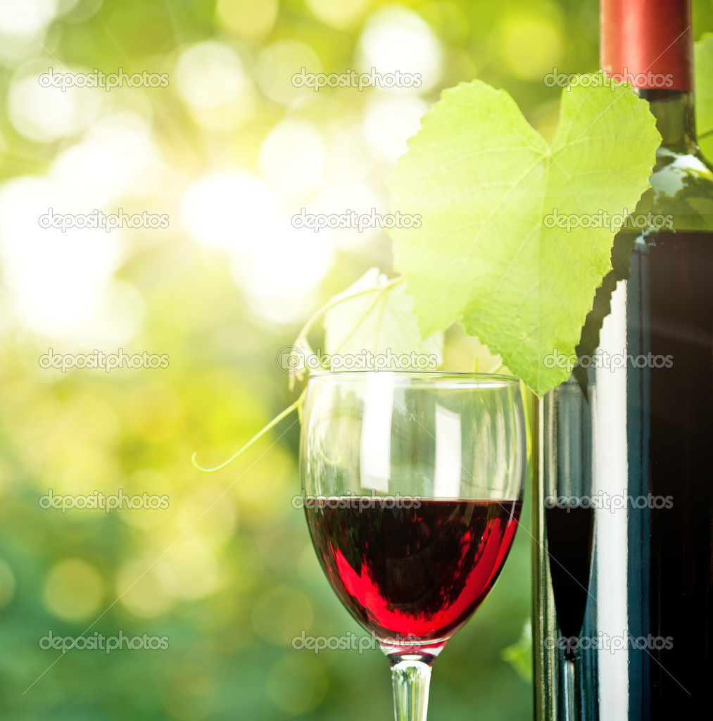Red wine bottle, one glass and young vine