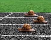 Schneckenrennen auf der Sportstrecke