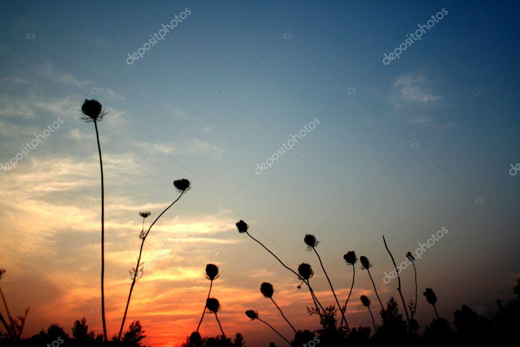 Фотообои Солнце Установить Время