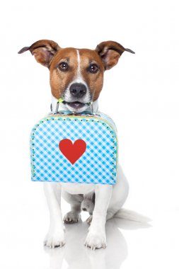 Dog with a small luggage with a big heart