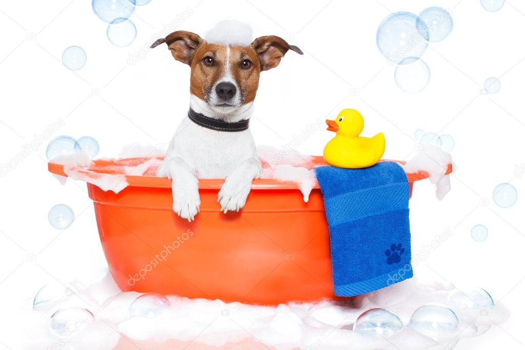 Vasca Da Bagno In Plastica : Cane facendo un bagno in una vasca da bagno colorato con una papera