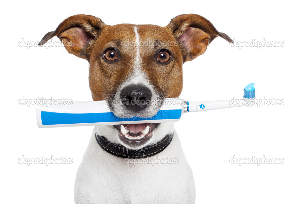 Dog with electric toothbrush