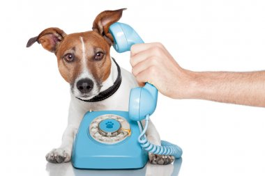 Dog on the phone with male hand