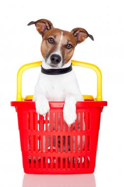 Dog in a red and yellow shopping basket