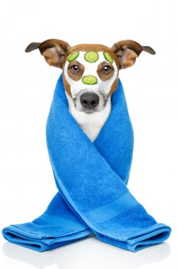 Dog with blue towel and a cream mask