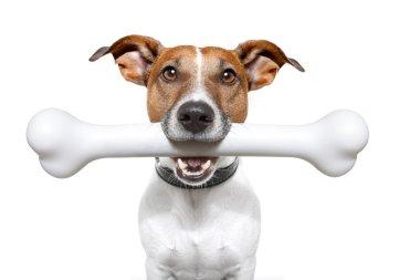 Dog with a white bone