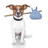 Fotografie Dog and a stick