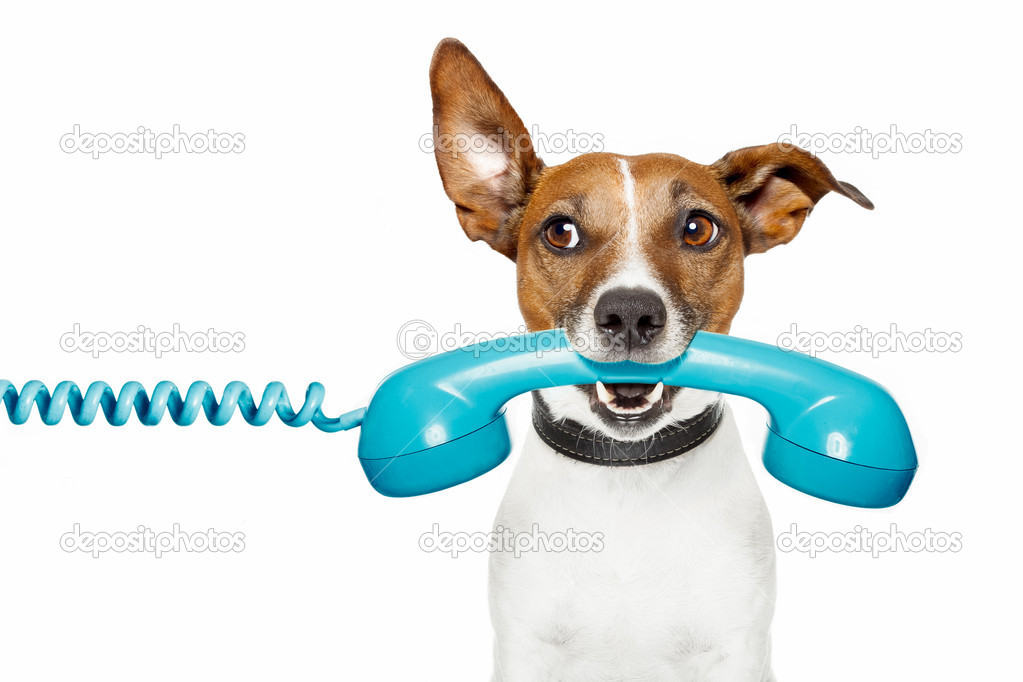 Dog on the phone and looking the side