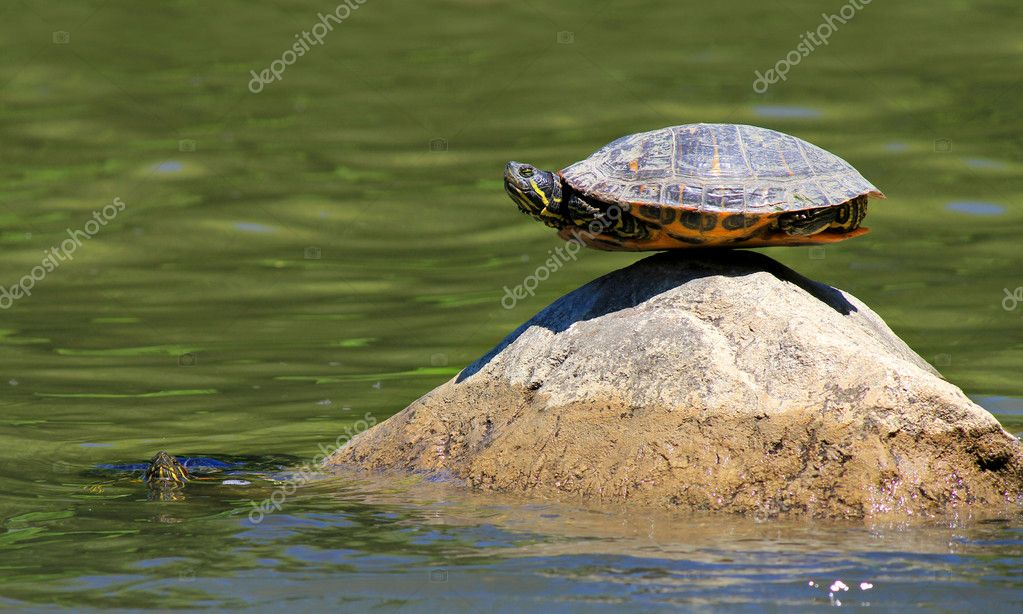 Turtle doing yoga finding the ultimate sense of balance