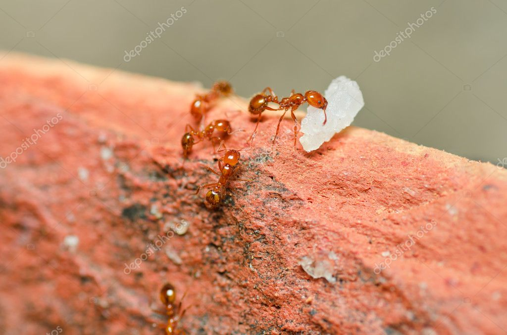Fire ant power