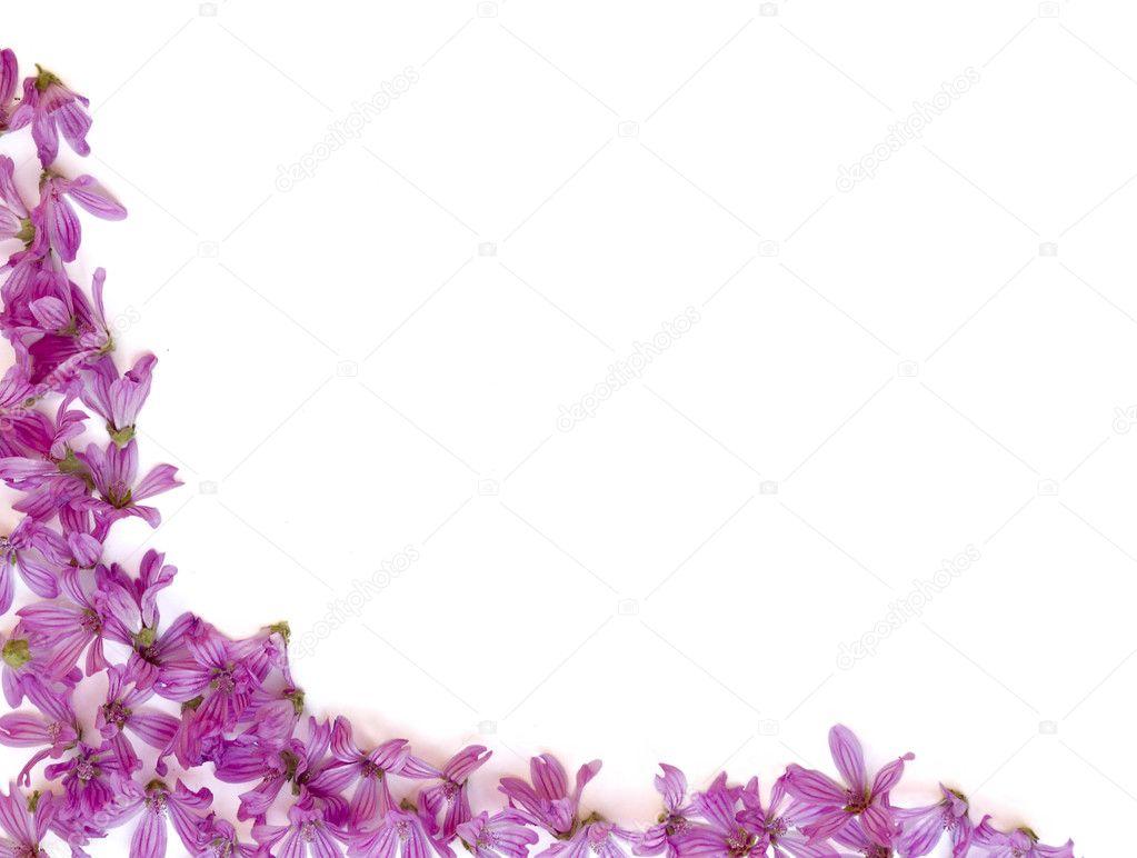 Purple flowers background stock photo xavigm99 9348560 purple flowers on a white background photo by xavigm99 mightylinksfo Choice Image