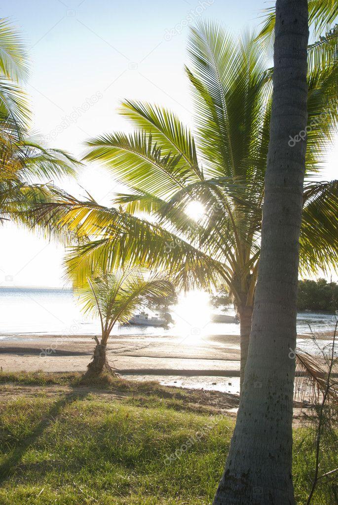 Sun sets behind eaf of tropical palm tree