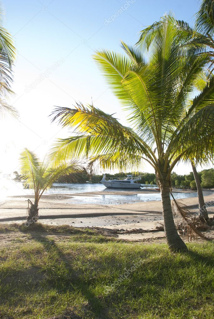 Different sized palm trees growing in bay