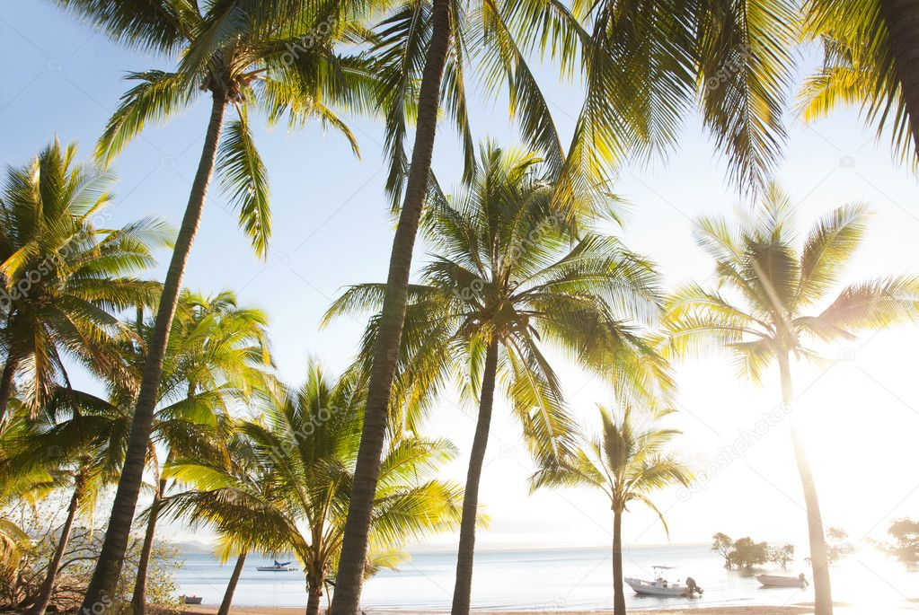 Tropical palm trees at bay with anchored boats