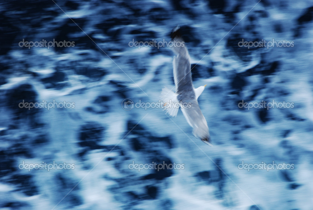 Seagull with motion blur over water