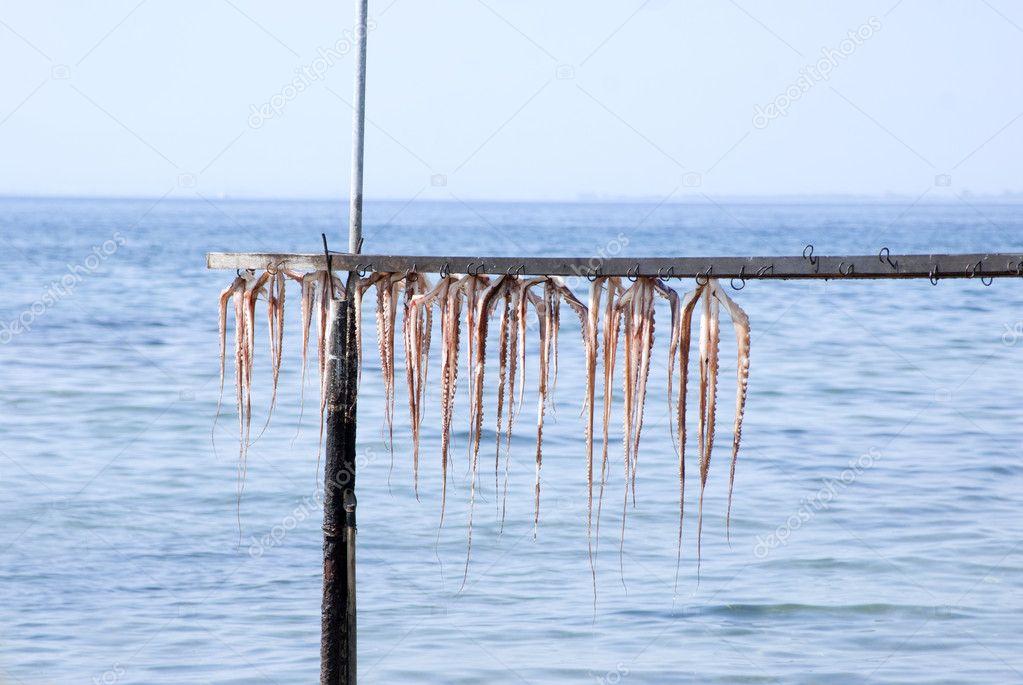 Вид: кальмар продукция: сушеная и вяленая рыба и морепродукты, снеки.