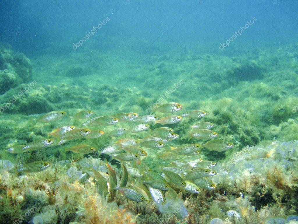 Small School Of Fish