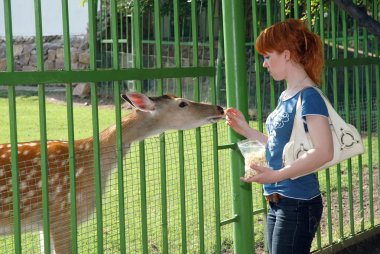 A girl feeding a deer in the zoo