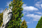 Angel v hřbitov svitavy, Česká republika