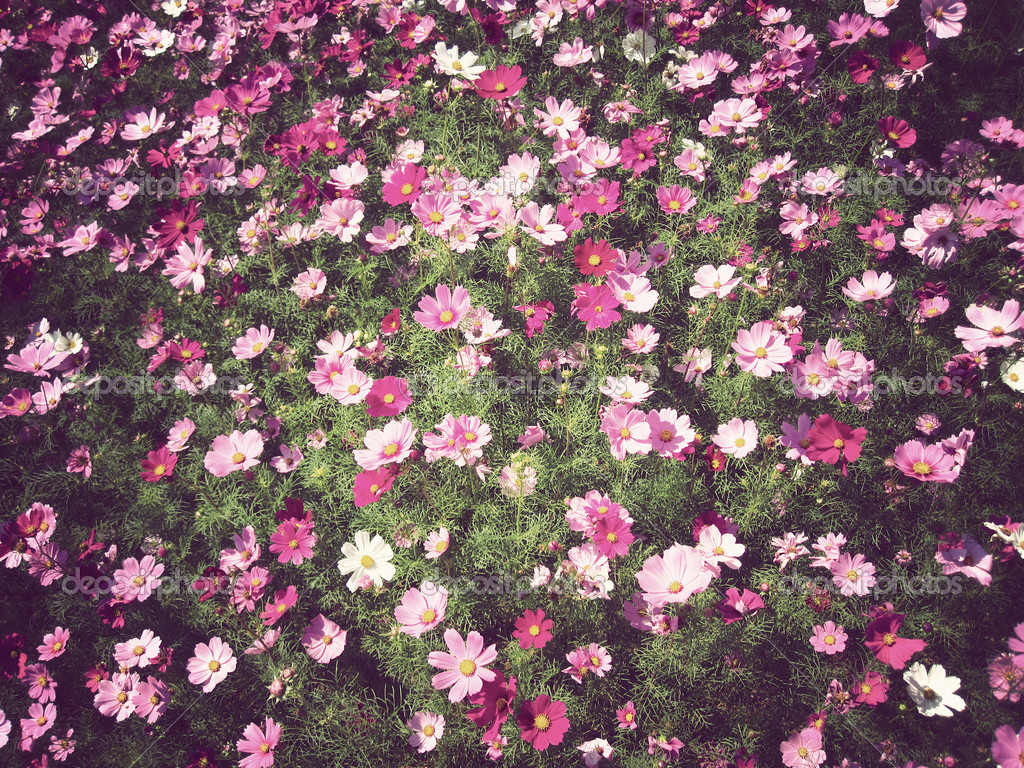 Flowers background Vintage
