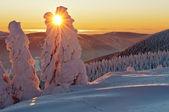 zimní wonderland