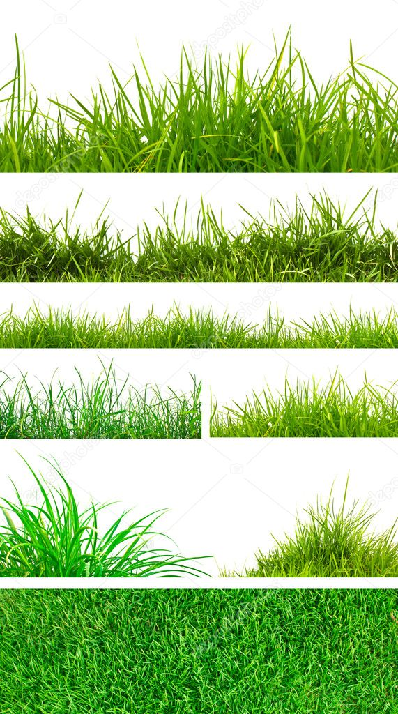 Fresh spring green grass
