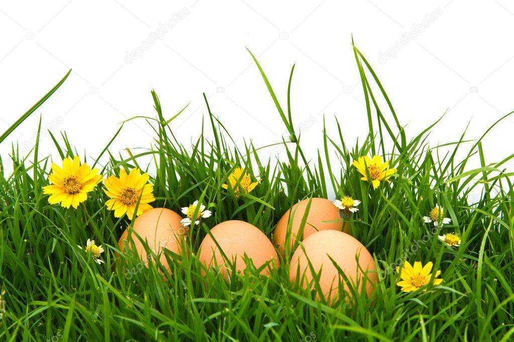 Easter Eggs with flower on Fresh Green Grass over white backgrou