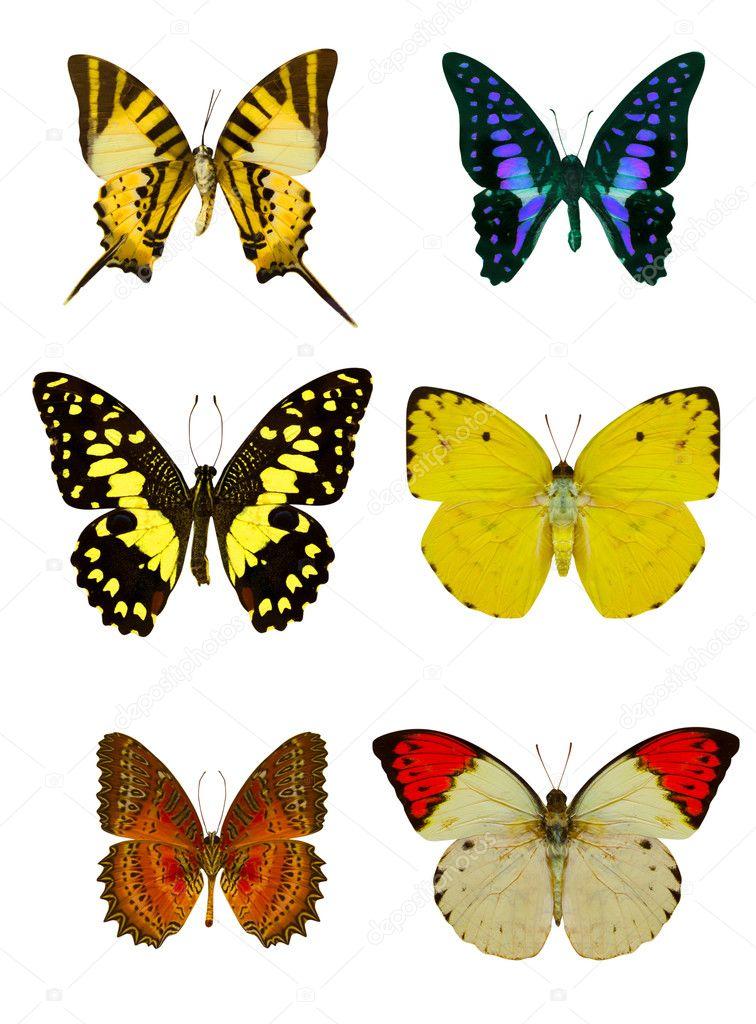 Фото метелики