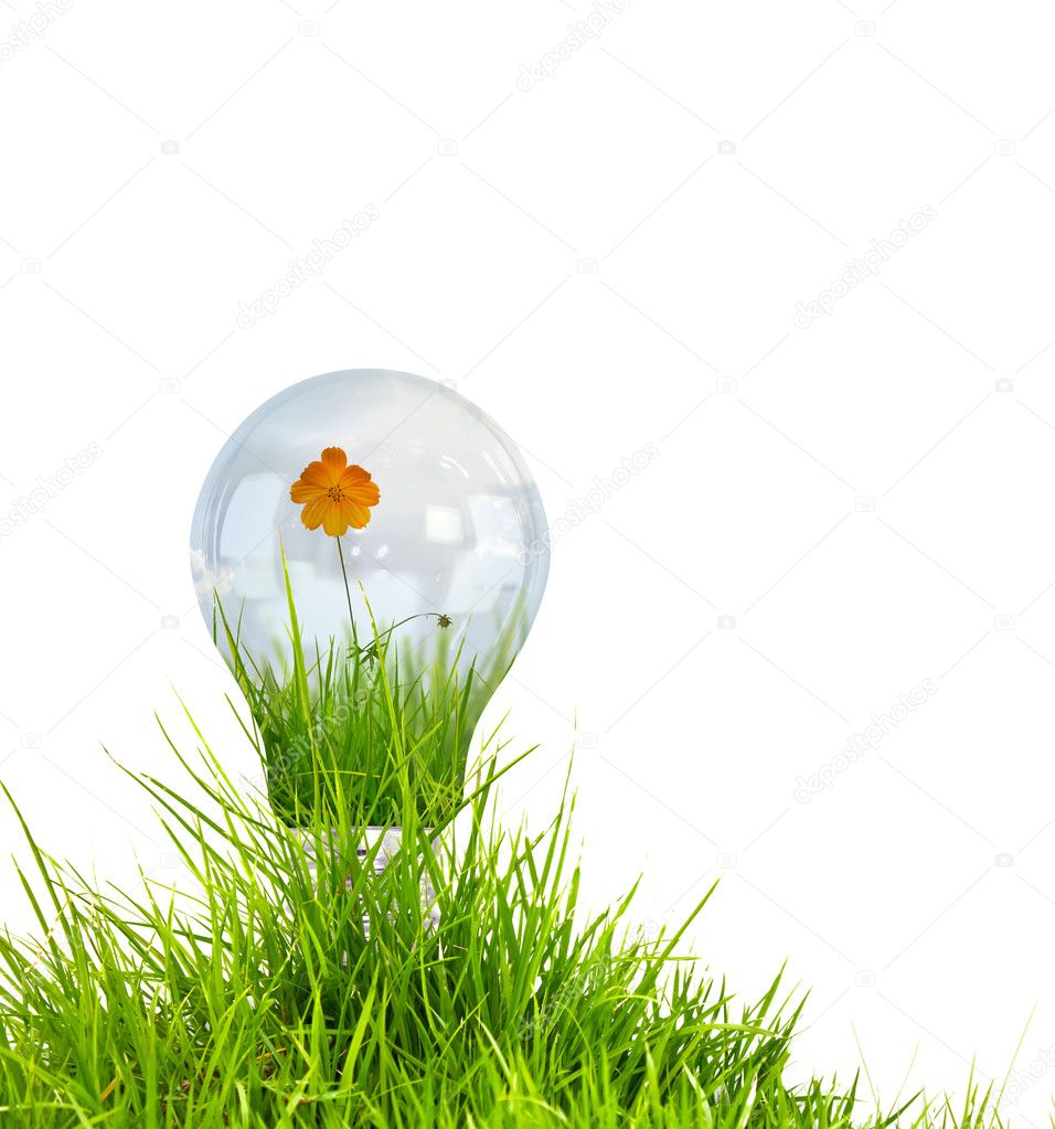 Light bulb with beautiful flower inside