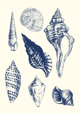 7 various seashells