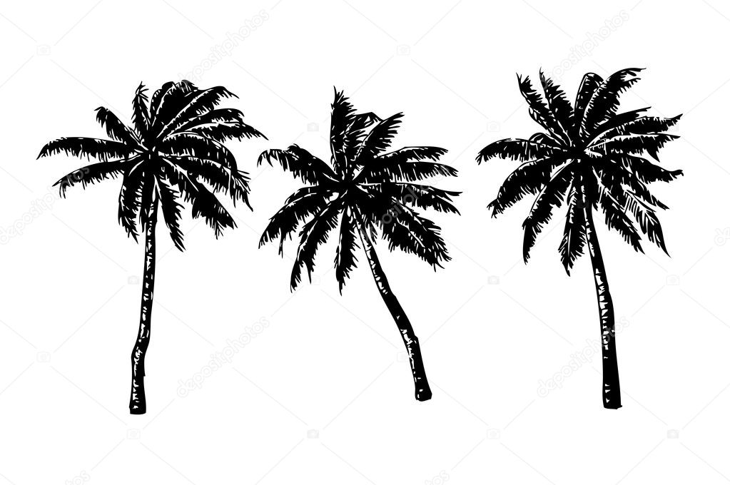 3 hand-drawn palms