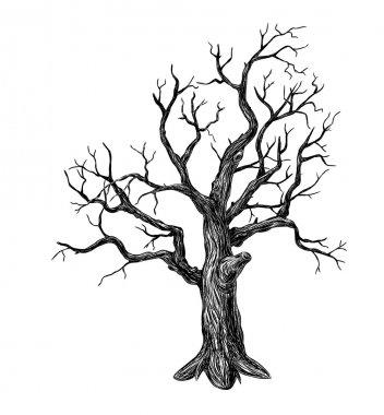 Old Tree