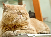 Sleepy cat lying on warm machine unwilling to open its eyes