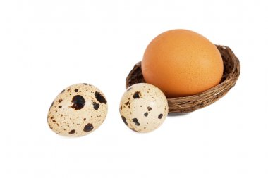 Alien Cuckoo's egg in the nest replaced quail eggs