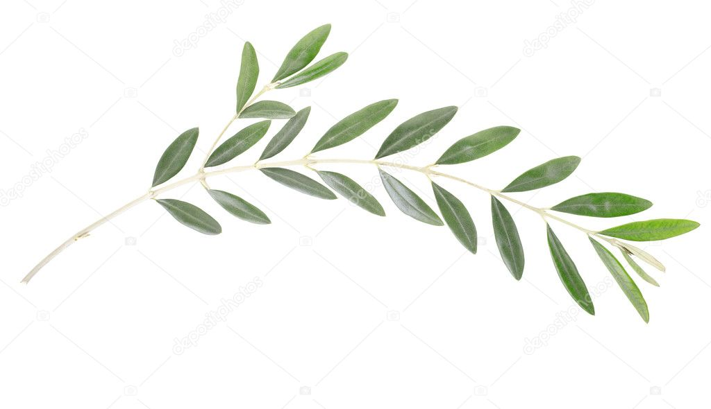 Olive branch, peace symbol