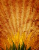 grunge design s slunečnice