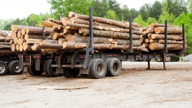Pine timber stacked on trailer at lumber yard awaiting shipment
