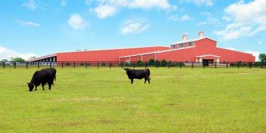 Modern cattle farm in Florida